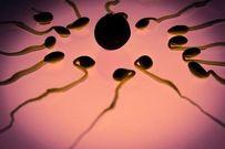 Phát hiện mới gây sốc: Tinh trùng có thể chữa khỏi bệnh ung thư ở nữ giới