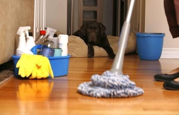 13667-housecleaning.jpg