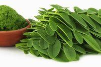Công dụng và những lưu ý khi ăn rau chùm ngây