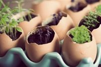 Tổng hợp các mẹo làm vườn cực hay cực hữu ích cho người thích gieo trồng