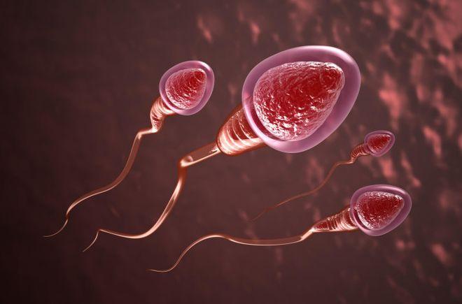phóng tinh trùng vào âm đạo