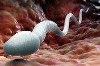 Quá trình thụ thai diễn ra như thế nào bạn có biết?