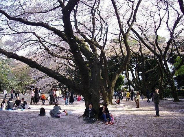 14077-ngam-hoa-anh-dao-o-cong-vien-shinjuku-gyoen.jpg