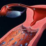Chu kỳ rụng trứng của phụ nữ và những thông tin cơ bản chị em cần biết