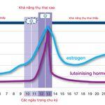 Ngày rụng trứng của phụ nữ được xác định qua 3 biểu đồ tính toán chính xác