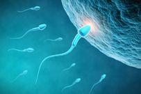 Ngày rụng trứng của phụ nữ cần được bổ sung những thực phẩm cần thiết