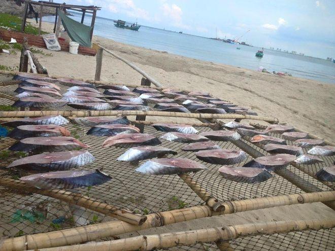 phơi cá thu ngoài nắng