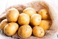 Cách trồng khoai tây đơn giản tại nhà