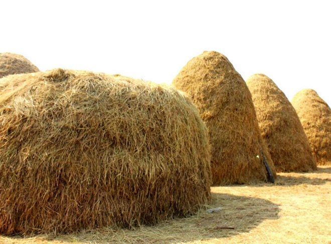 nguyên liệu trồng nấm rơm