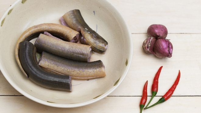 cách chọn lươn