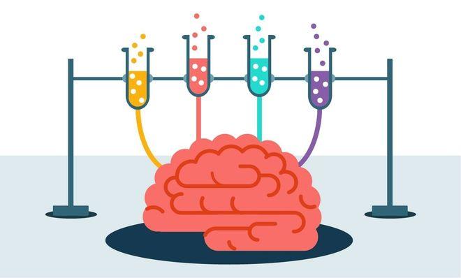 giúp não bộ phát triển