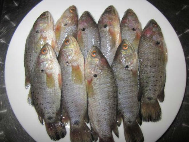 ướp cá rô phi với muối