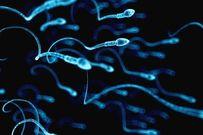 Thụ tinh nhân tạo lấy tinh trùng ở đâu các cặp đôi nên biết