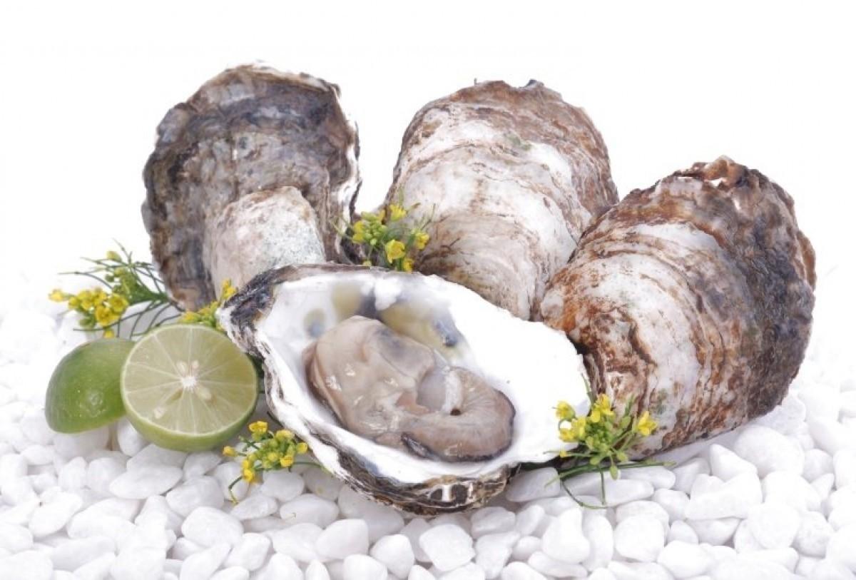 hàu chứa nhiều dưỡng chất giúp tăng khả năng thụ thai hiệu quả