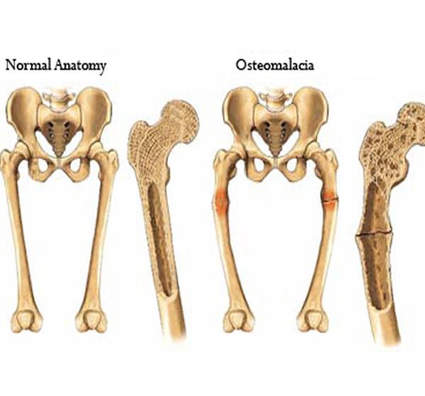 đặc điểm xương