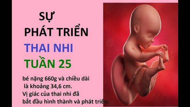 thai nhi 25 tuần tuổi đã phát triển rất nhanh