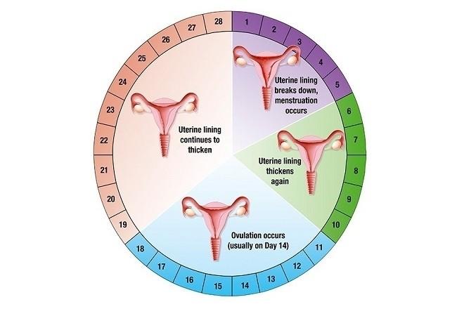 tránh thai an toàn theo chu kì kinh nguyệt