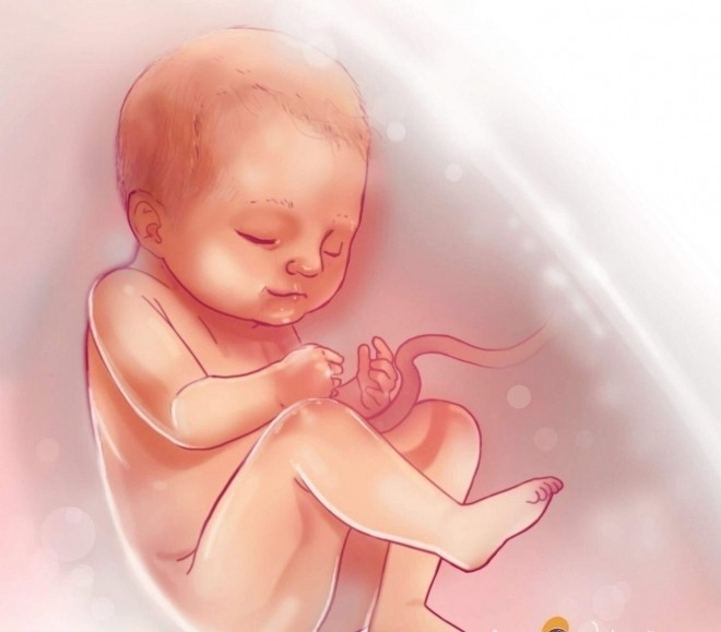 Hệ miễn dịch chưa hoàn thiện dễ khiến trẻ bị mắc một số bệnh khi sinh ra