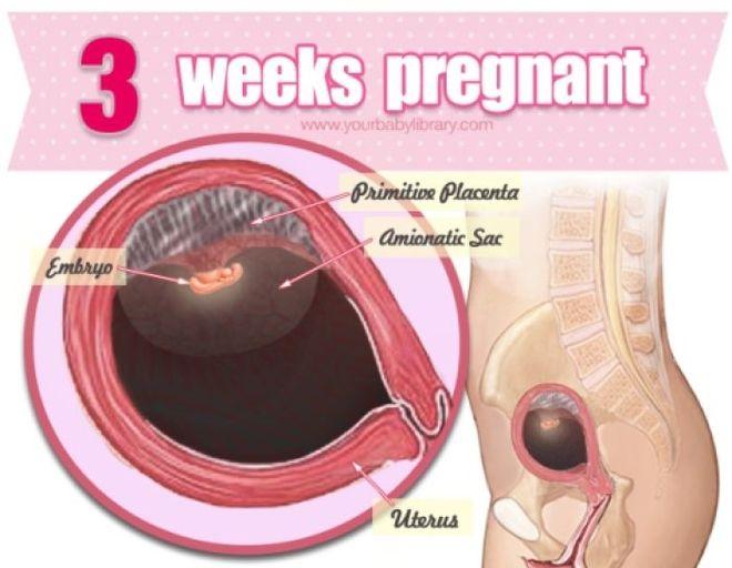 thai 3 tuần mẹ bắt đầu có những thay đổi nhẹ