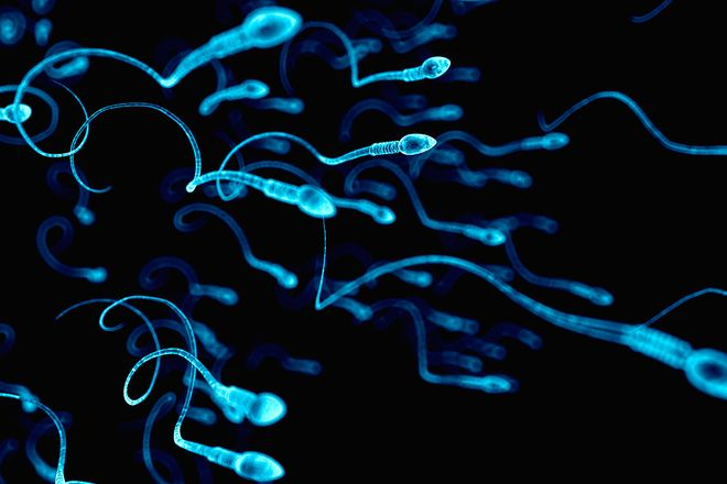 Sau khi phóng tinh, sẽ có từ 300   500 triệu tinh trùng vào trong âm đạo