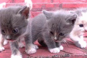 Bé học các con vật bằng đồ chơi dễ thương