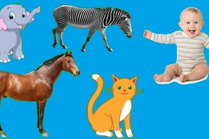 Dạy bé học chủ đề con vật hiệu quả - Phần 4