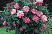 Top 16 loại hoa dễ trồng, cho nhiều hoa thích hợp với thời tiết se lạnh cuối năm
