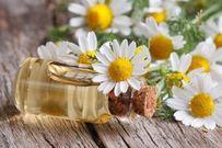 10 lợi ích tuyệt vời của hoa cúc đối với sức khỏe ít ai biết