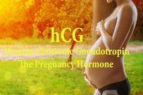Những dấu hiệu mang thai và hormone hCG