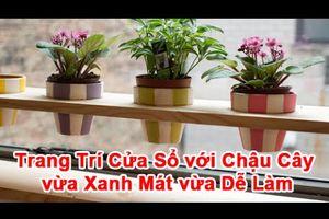 Trang Trí Cửa Sổ Với Chậu Cây Vừa Xanh Mát Vừa Dễ Làm