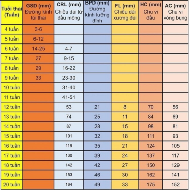 Bảng chỉ số thai nhi từ tuần 1 đến 20.