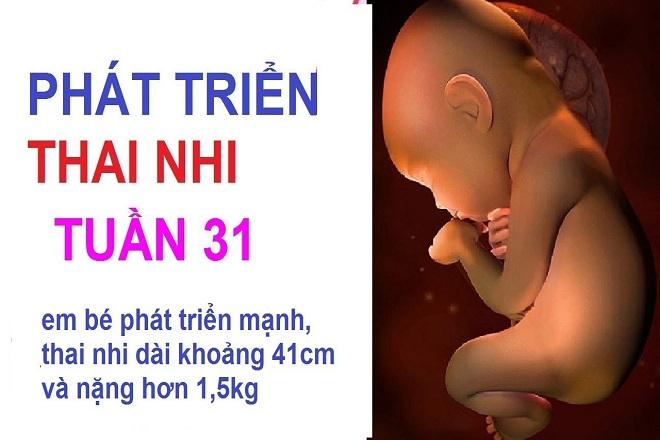 thai nhi tuần 31