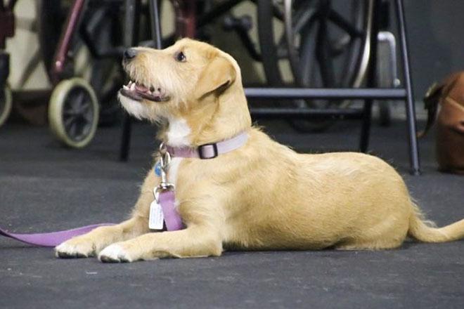 Áp dụng quy tắc cư xử của loài chó