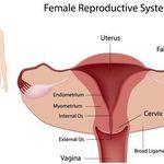 Độ dày - mỏng của niêm mạc tử cung ảnh hưởng đến việc thụ thai