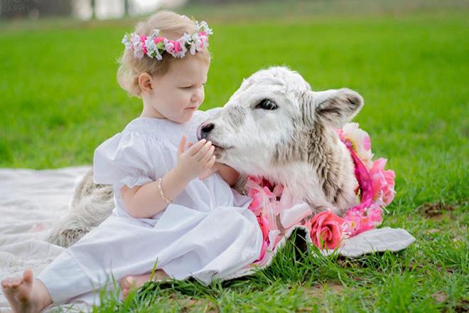Trẻ chạm vào con bò