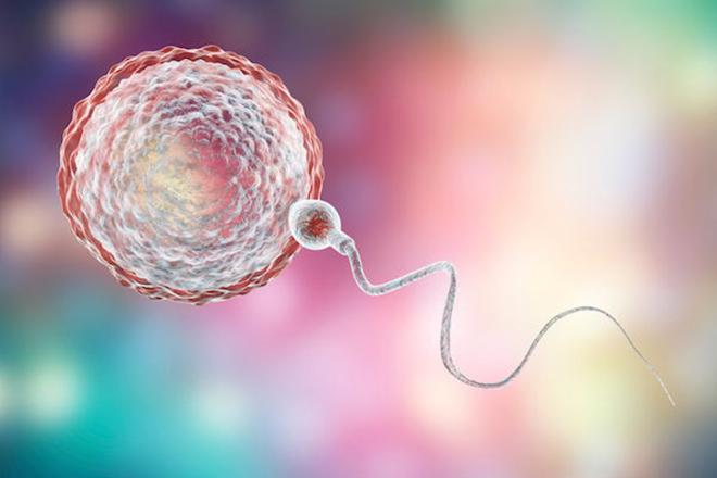 Trứng và tinh trùng