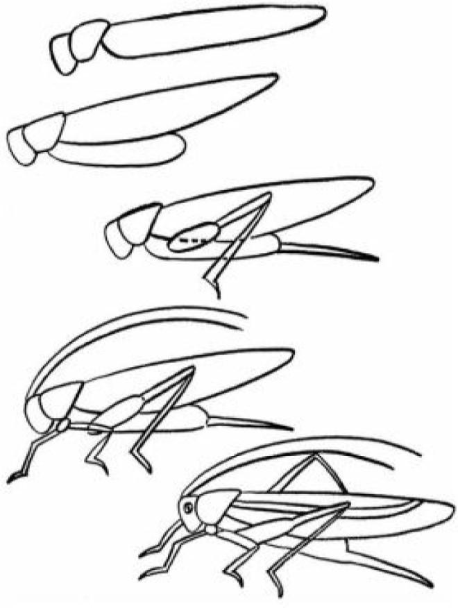 Vẽ hình con cào cào