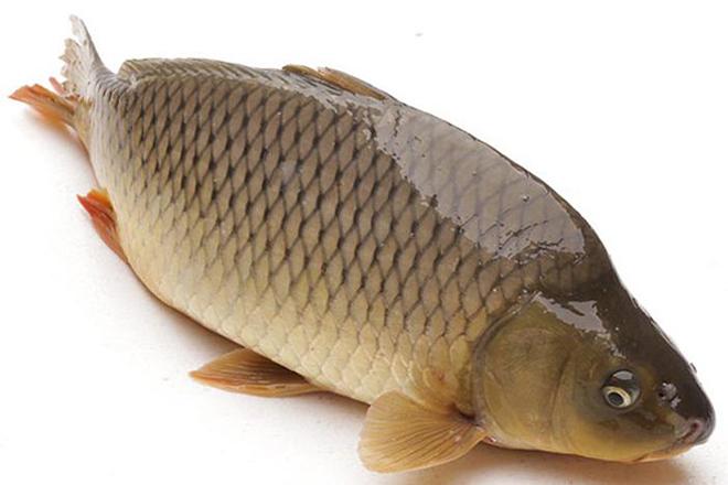 Cách chọn cá chép