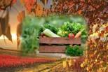 mùa thu ăn rau gì