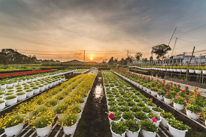 Du lịch tết 2020 làng hoa