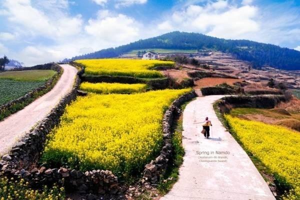 23501-dao-cheongsand.jpg