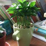 Các bước gieo trồng chậu cây cảnh nhỏ xinh để bàn từ 8 loại hạt và củ