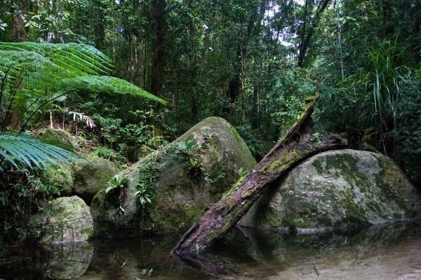 32049-daintree-national-park.jpg