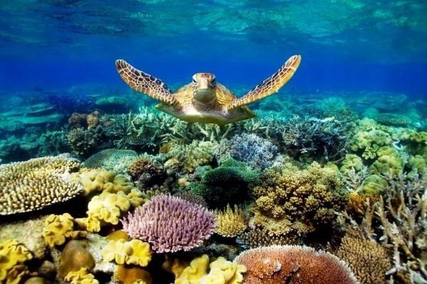 32056-great-barrier-reef.jpg