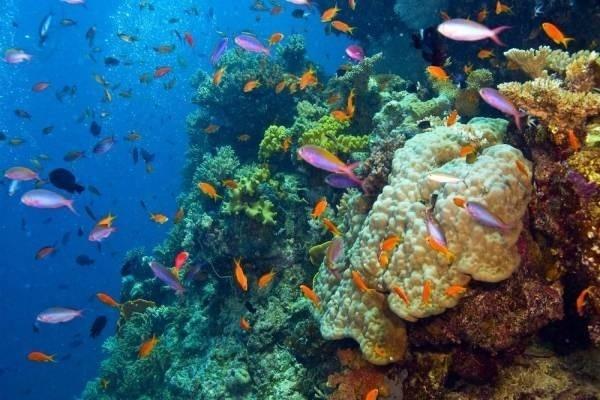 32057-great-barrier-reef1.jpg