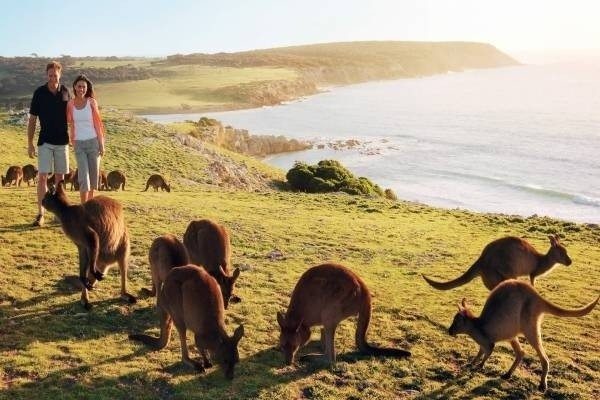 32067-kangaroo-island.jpg