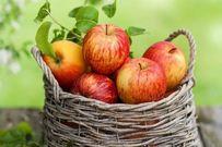 Mẹ ăn táo mỗi ngày giúp con tránh được hen suyễn khi chào đời