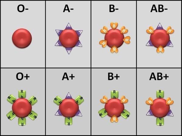 38308-blood-type-chart.jpg