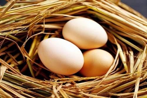 Bà bầu nên ăn bao nhiêu trứng ngỗng là tốt nhất?
