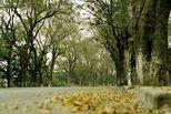 Những mùa thu đã qua